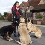 Annie's Dogs - Dog Trainer